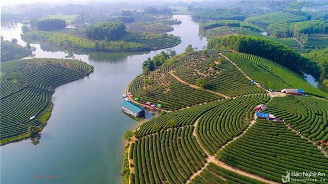 Trong những ngày lễ này, mỗi ngày đảo chè thu hút hàng ngàn lượt khách đến tham quan, chụp ảnh. Ảnh: Nguyễn Thanh Hải